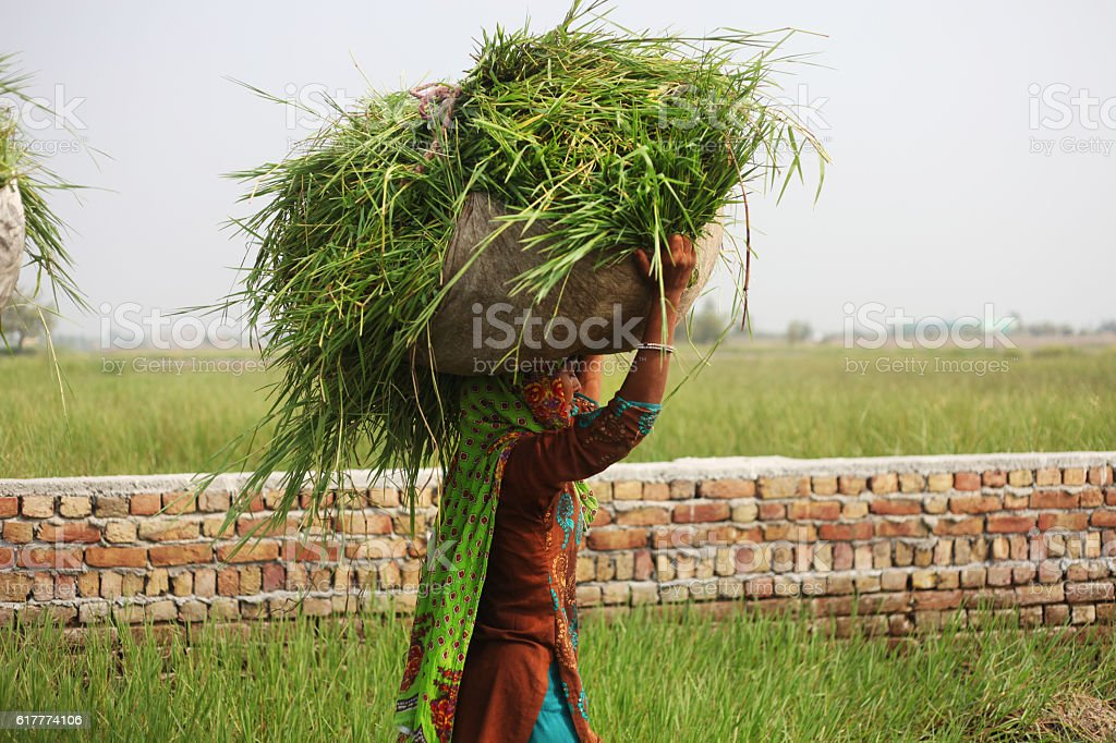 Carrying grass on head stock photo