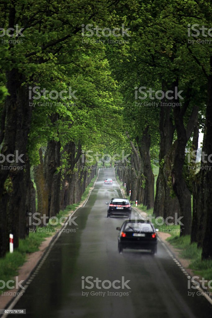 Fast driving cars on a treelined road on a rainy day in