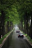 Cars on a treelined road on a rainy day