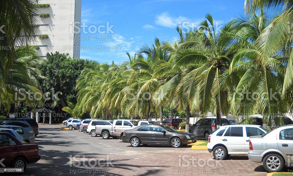 Cars stand under palm trees in Ixtapa town stock photo
