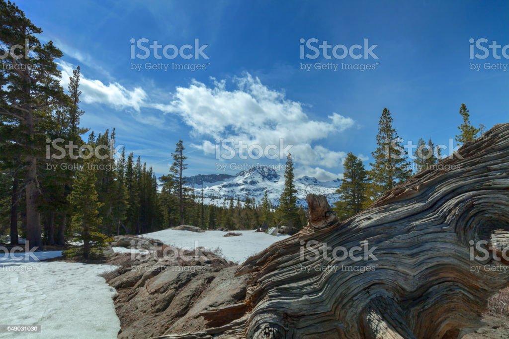 Carson Pass Winter stock photo