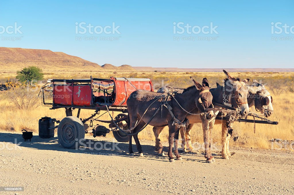 Cart pulled by three donkeys standing along  dirt road, Namibia. royalty-free stock photo