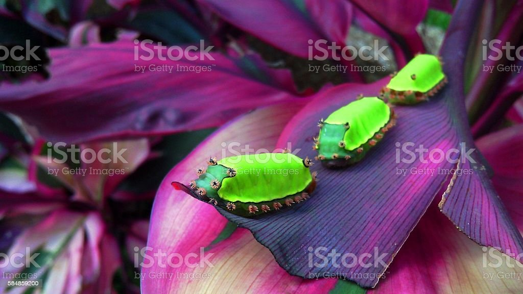 Carterpillar,Oruga,Raupe,Chenille,Bruco stock photo