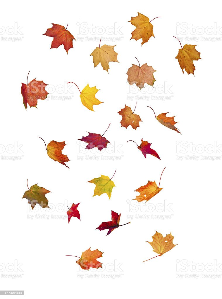 A cartoon depiction of multiple multicolored falling leaves stock photo