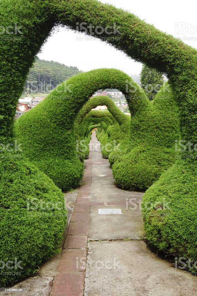 Carved evergreens in town square royalty-free stock photo