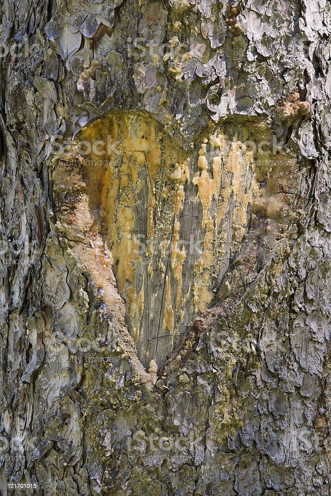carved heart in a tree royalty-free stock photo