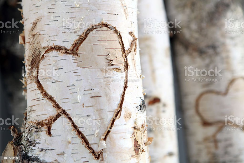 Carved heart in birch tree royalty-free stock photo
