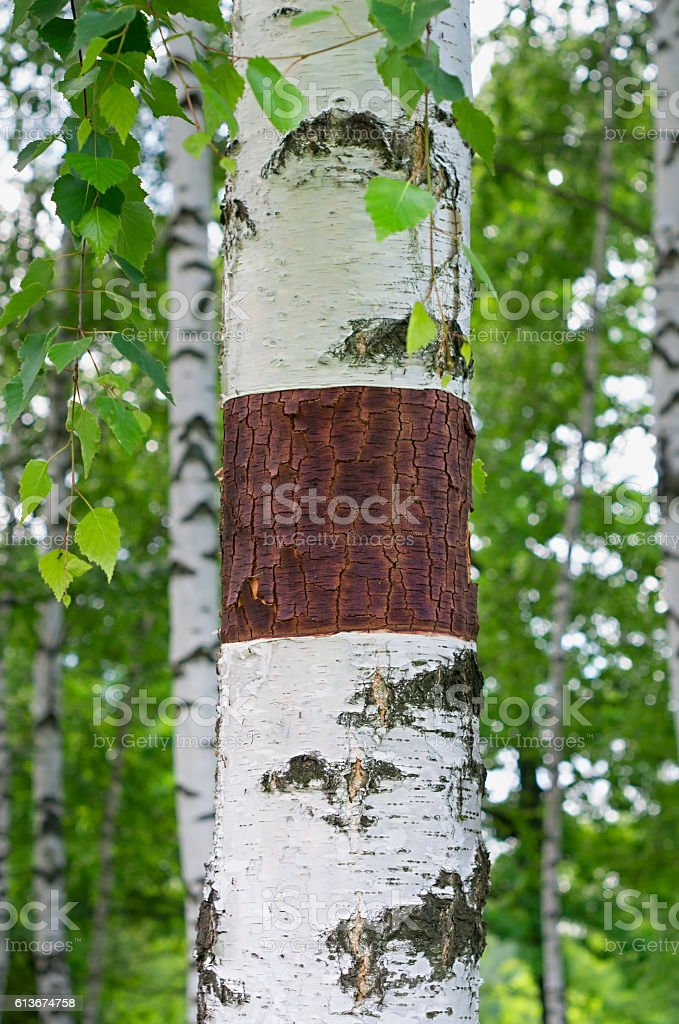 carved on the bark stock photo