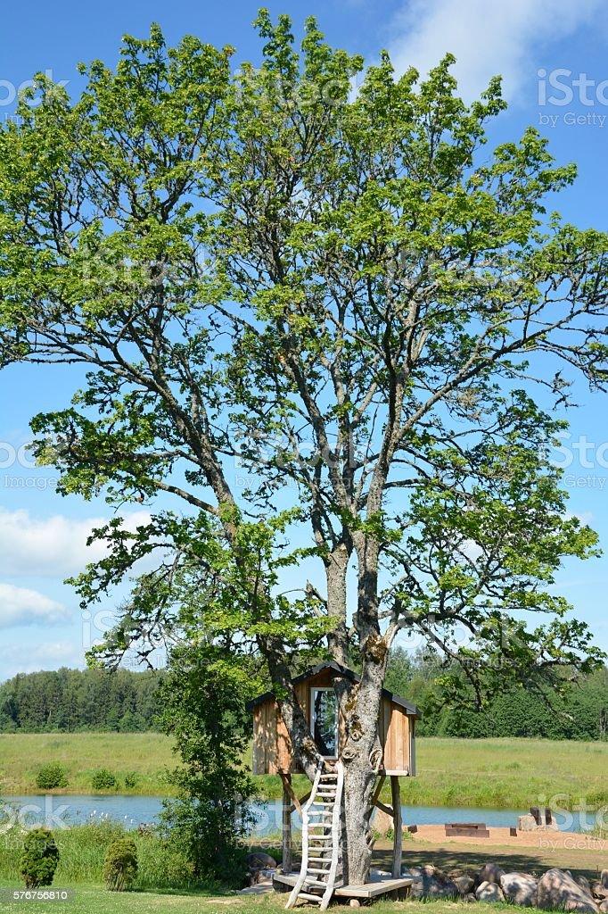 Casa de árbol stock photo