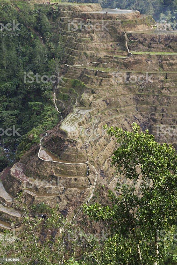 Cascada arrozales stock photo