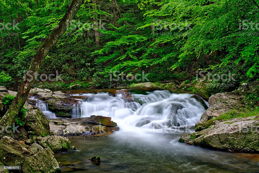 Cascade in Litttle Pigeon River in the Summertime stock photo