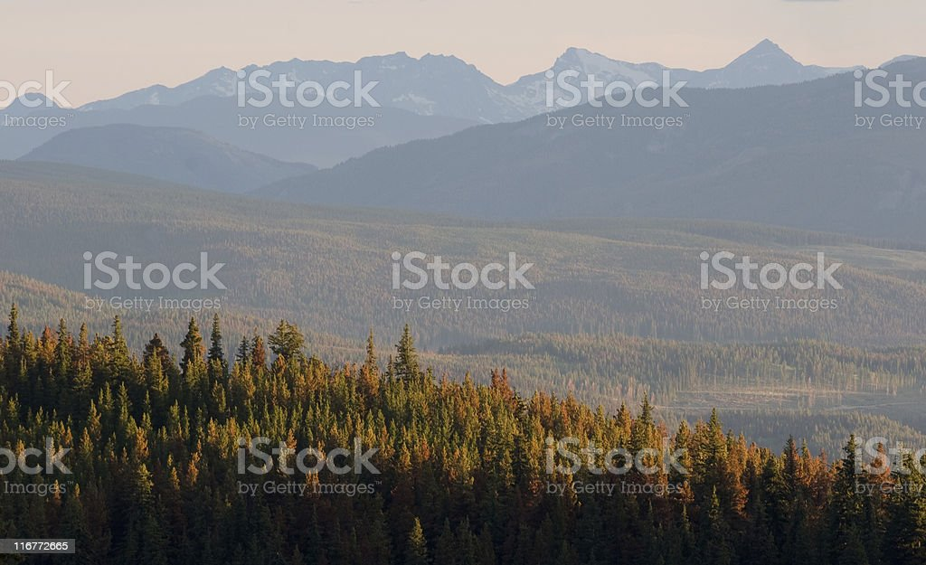 Cascade mountain range and trees stock photo