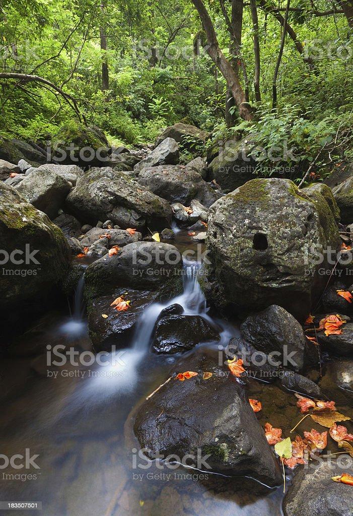 cascade near waikmoku falls - hawaii, maui stock photo