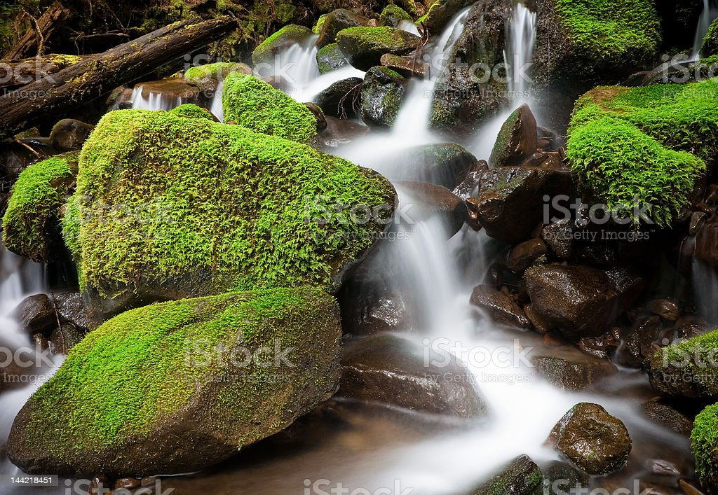 Cascading Creek, Olympic National Park stock photo