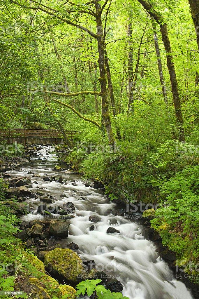 Cascading Stream at Springtime royalty-free stock photo