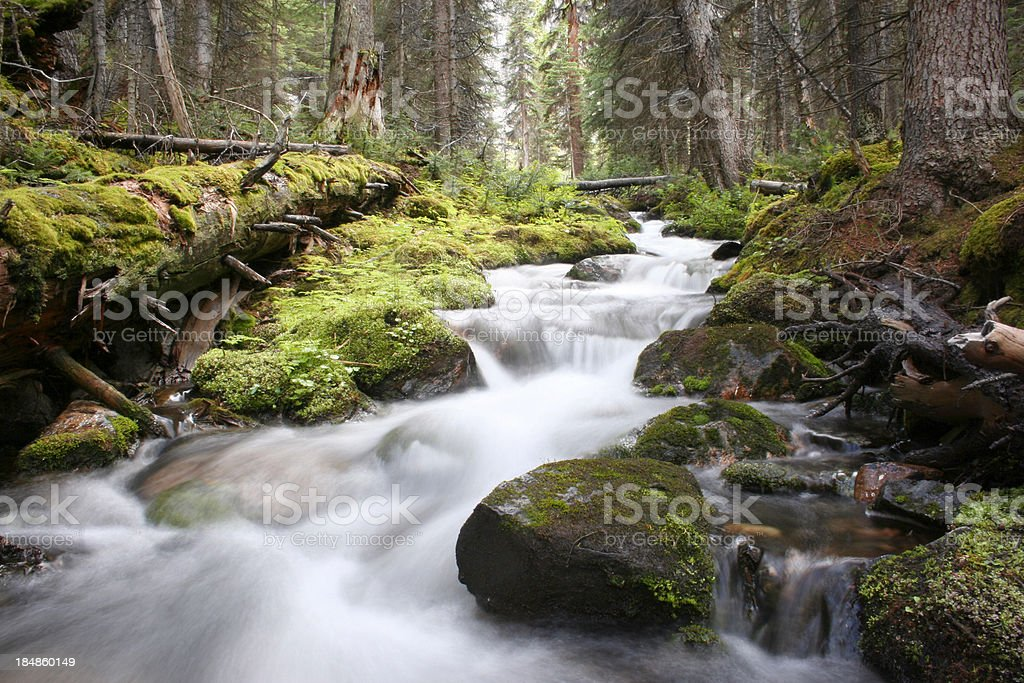 Cascading stream in a lush mossy green forest in Canada. stock photo