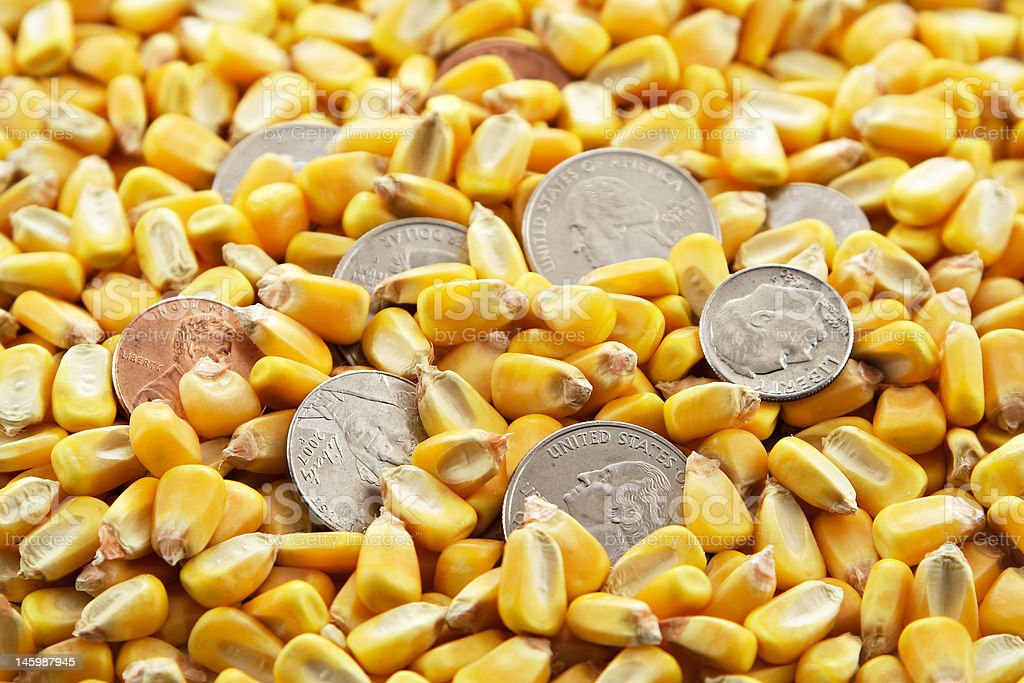 Cash Corn Crop royalty-free stock photo