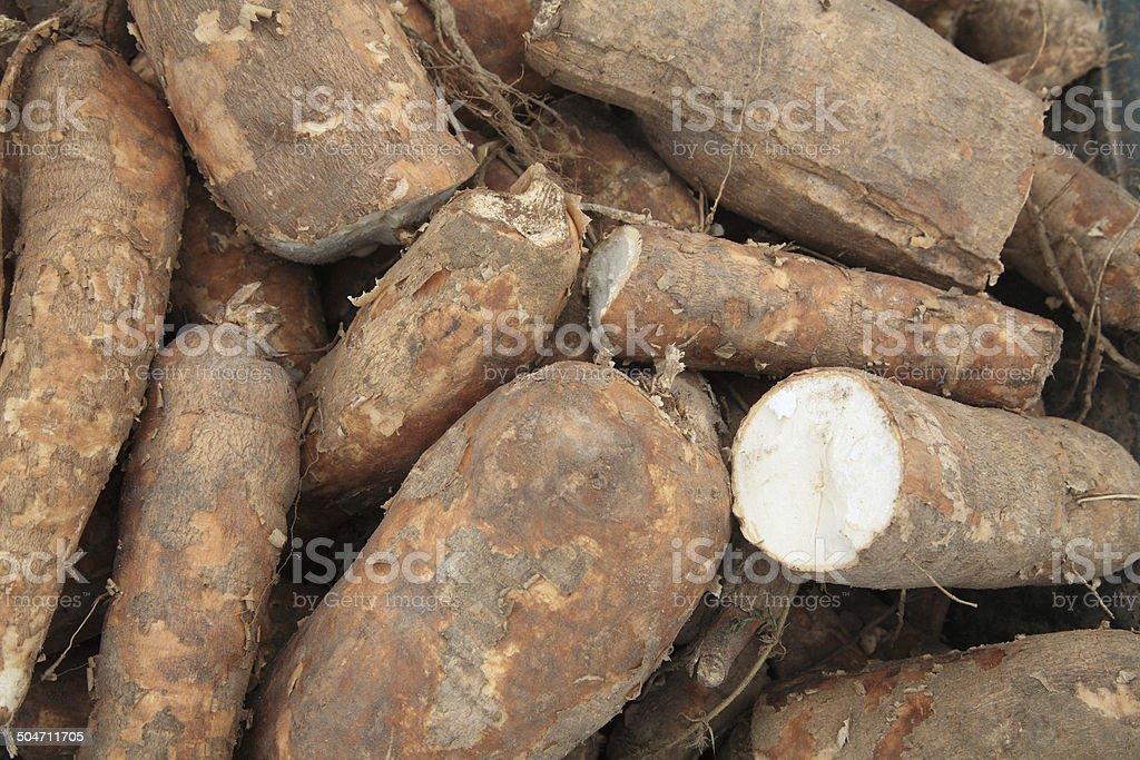 Cassava bulb stock photo