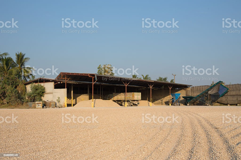 cassava on drying bed with tool and silo stock photo