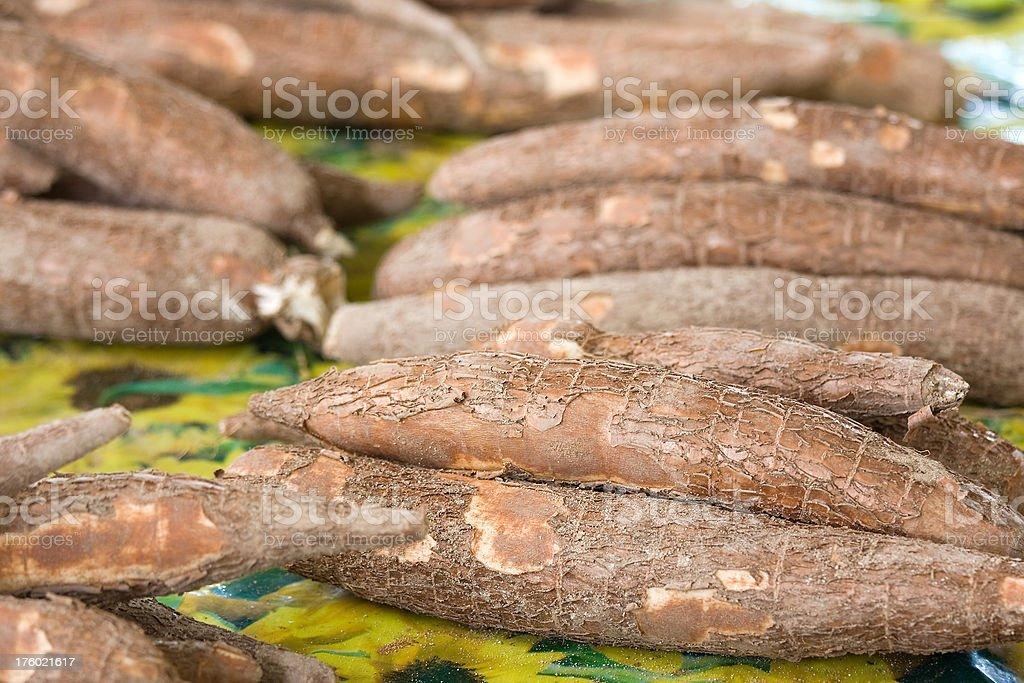 cassava royalty-free stock photo