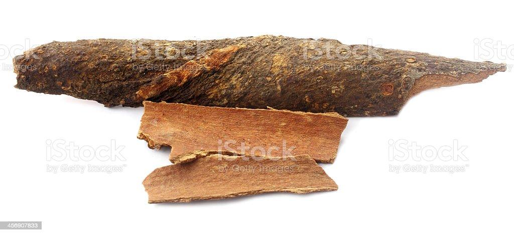 Cassia bark stock photo