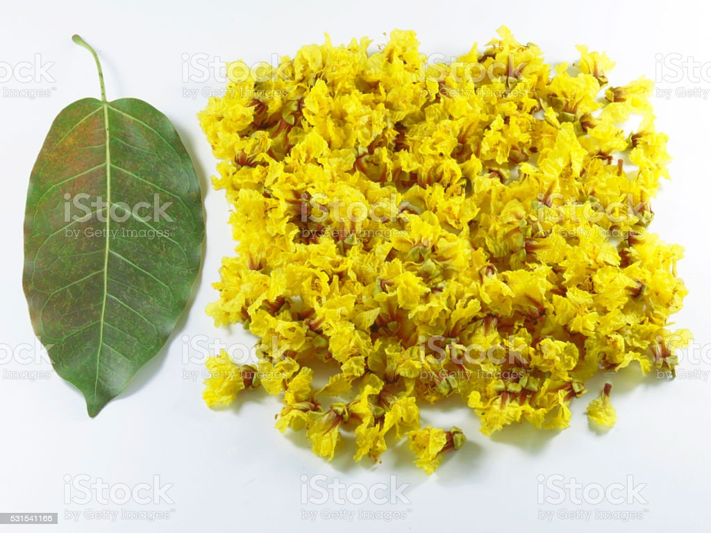 cassia flower Leaves stock photo