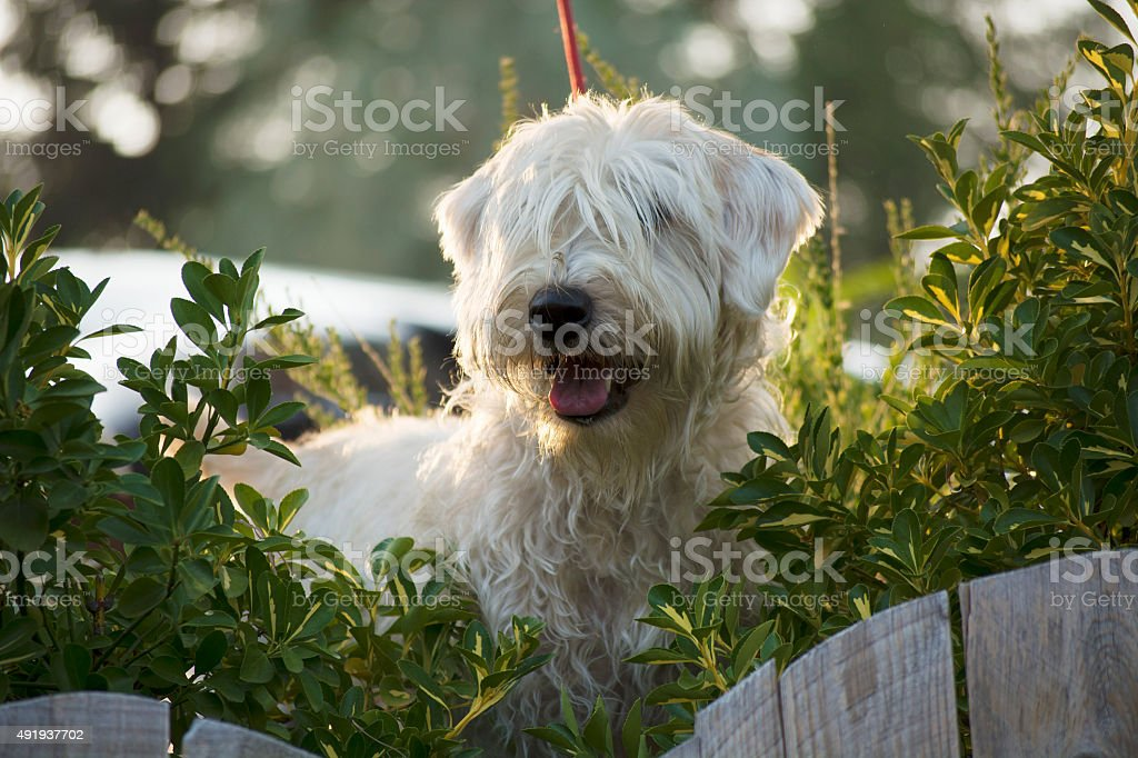 Cassy On Canine Patrol stock photo