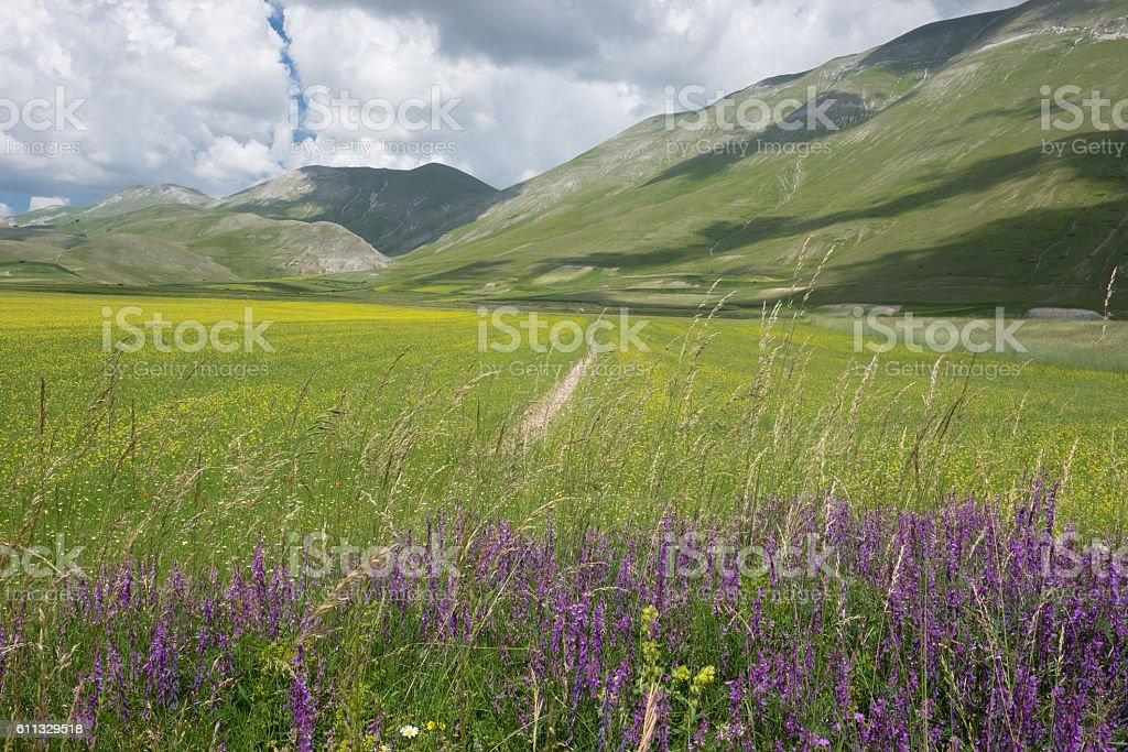Castelluccio di Norcia in the Sibillini Park stock photo