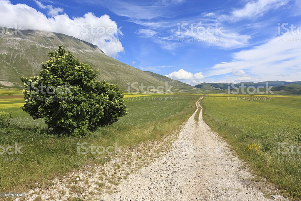 Castelluccio dirt road and oilseed rape fields, Umbria Italy royalty-free stock photo