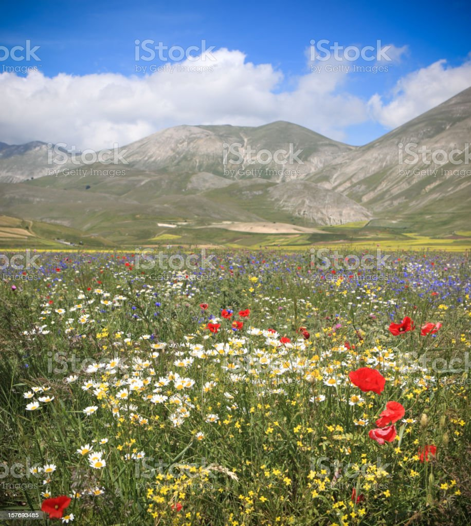 Castelluccio meadow and oilseed rape fields, Umbria Italy royalty-free stock photo