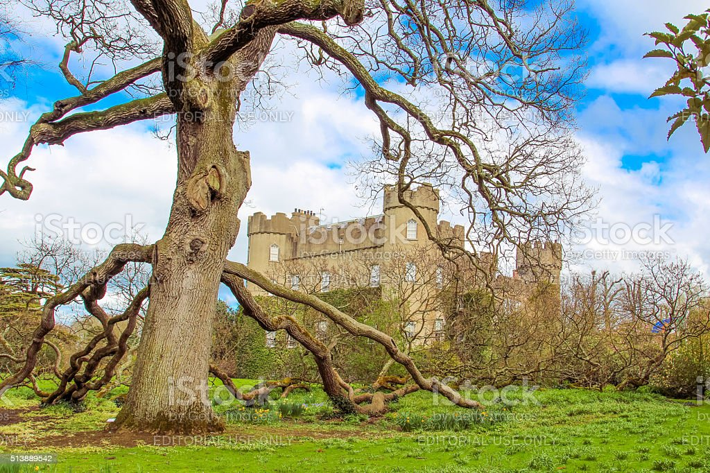 Castle and great tree. stock photo