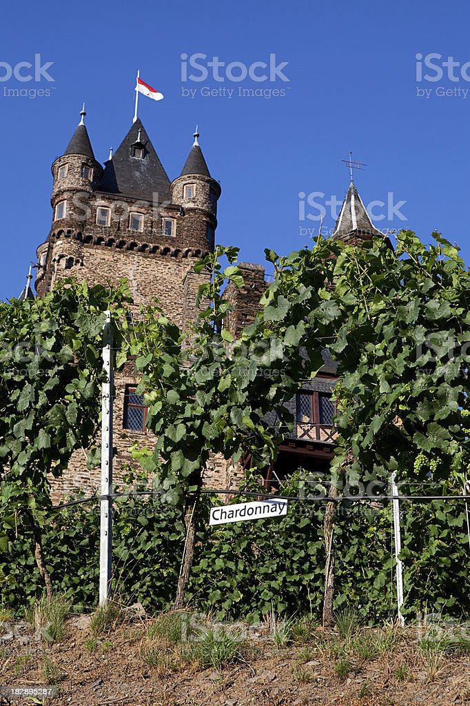 Castle and vineyard stock photo