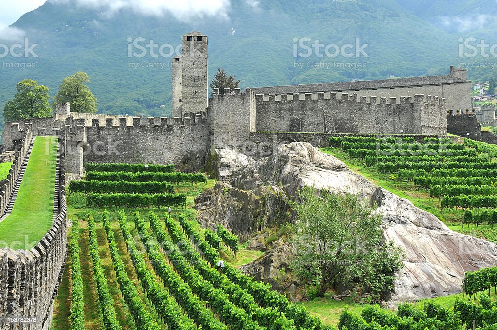 Castle and vineyards stock photo