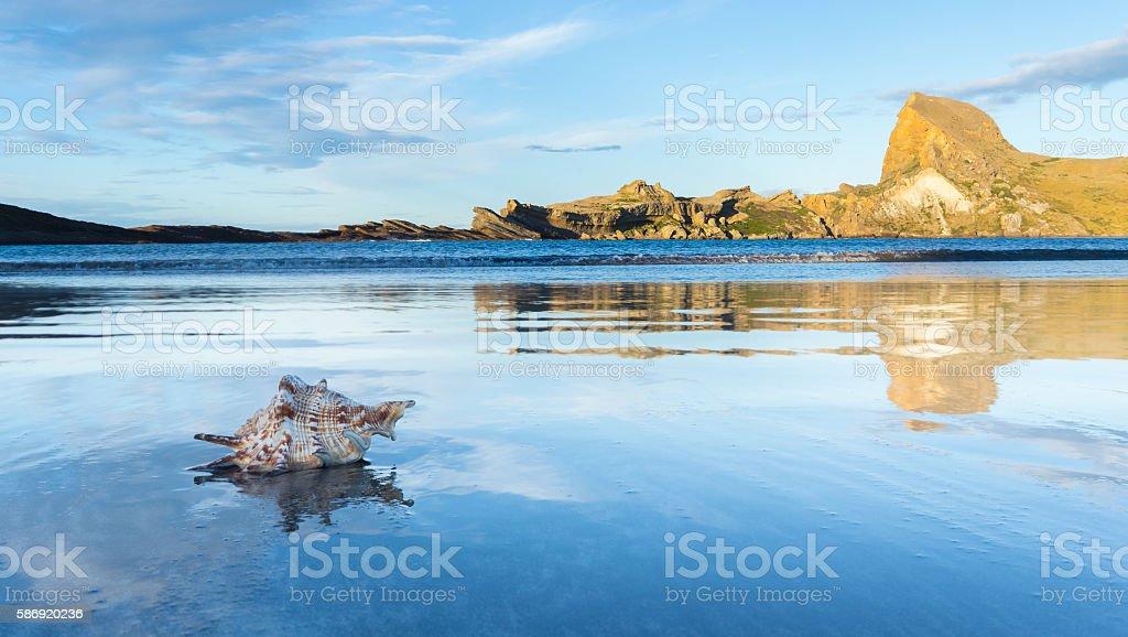 Castlepoint Seashell stock photo