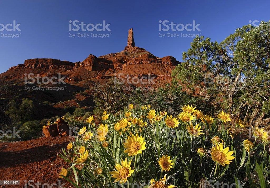 Castleton Tower, Moab stock photo