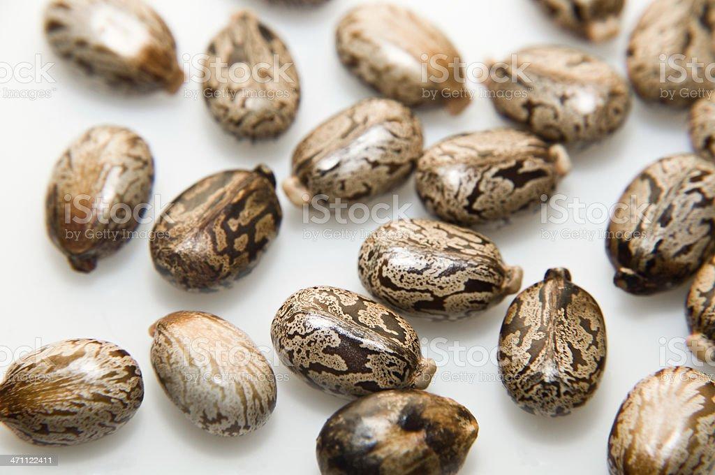 Castor beans royalty-free stock photo