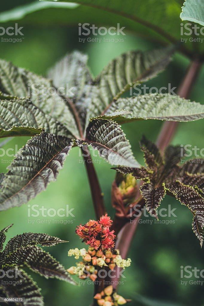 Castor garden stock photo
