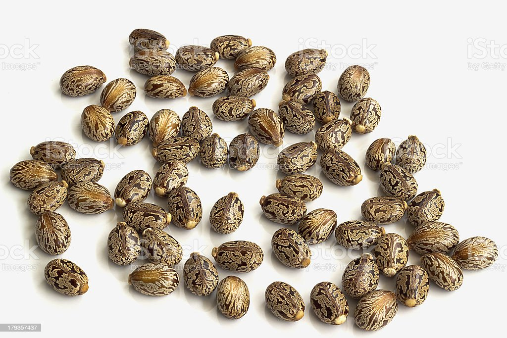 Castor oil seeds stock photo