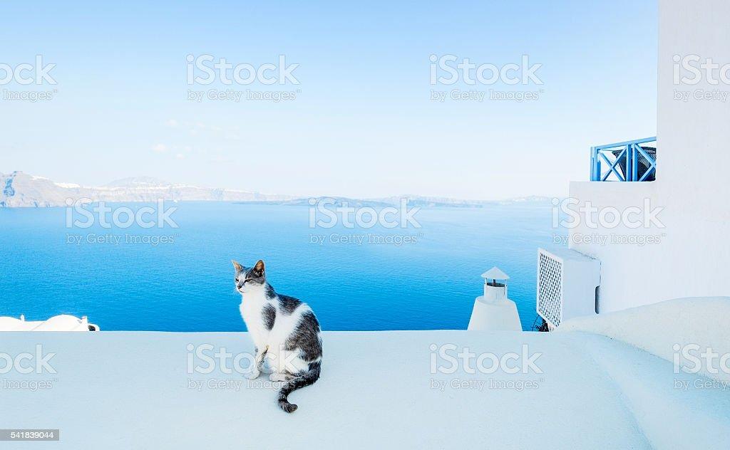 Cat against sky and sea in Santorini, Oia, Greece stock photo