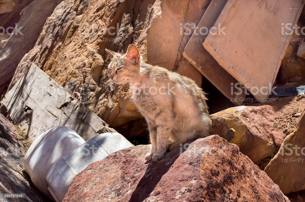 small cat sunbathing between garbage