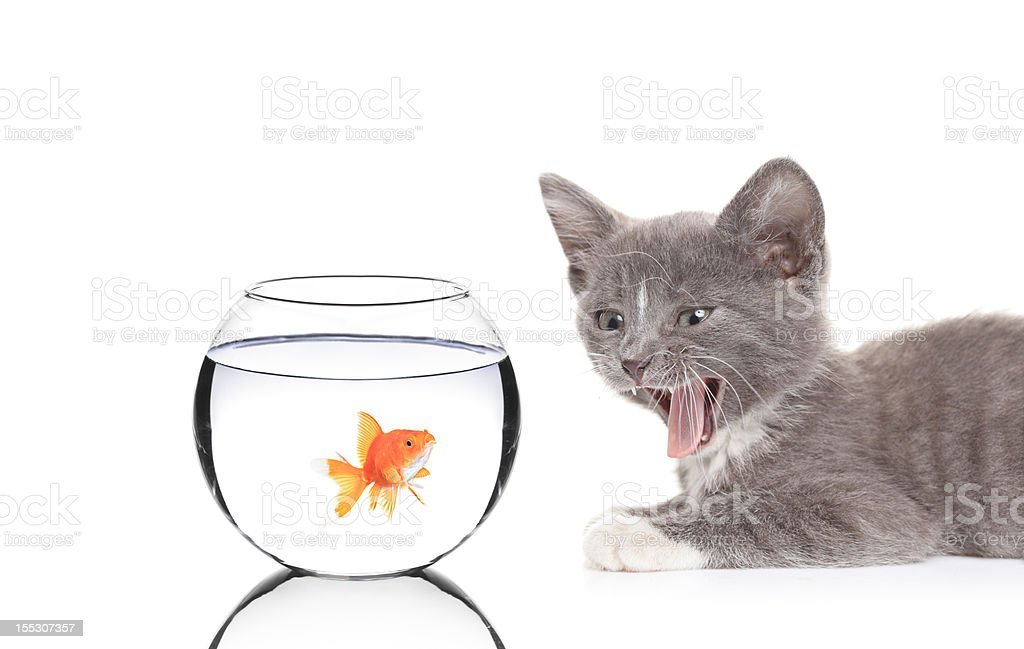 Cat and a fish stock photo