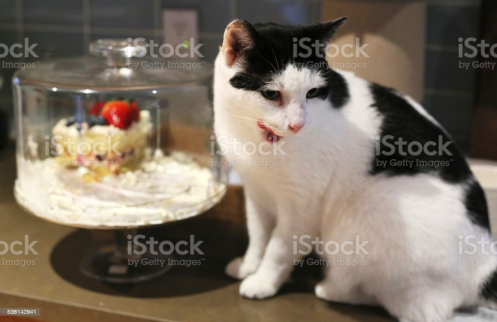 Cat and a Piece of Cake stock photo