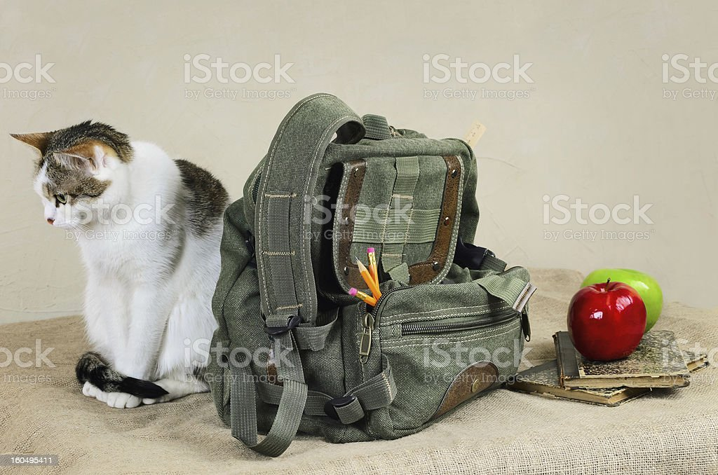 Cat And Backpack royalty-free stock photo