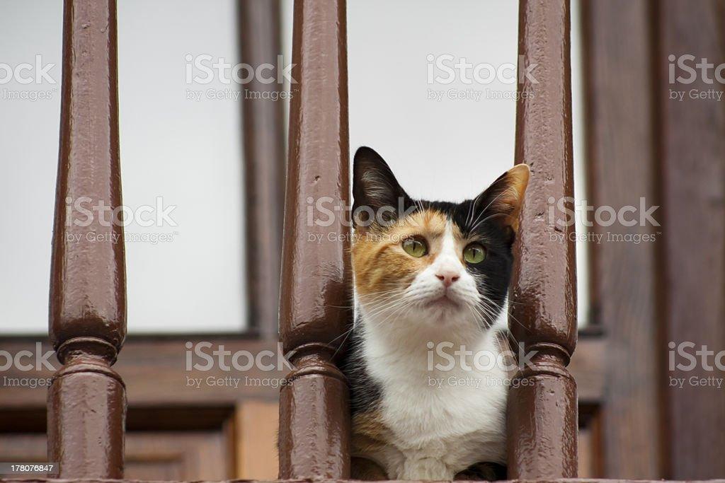 Cat and balcony stock photo