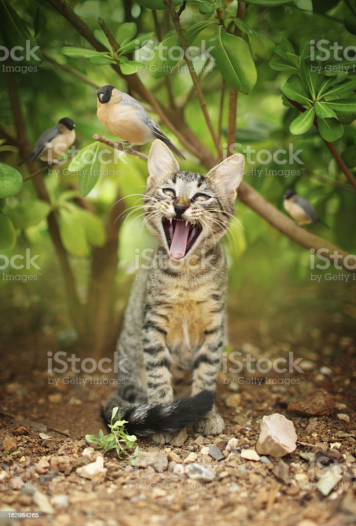 Cat and birds stock photo