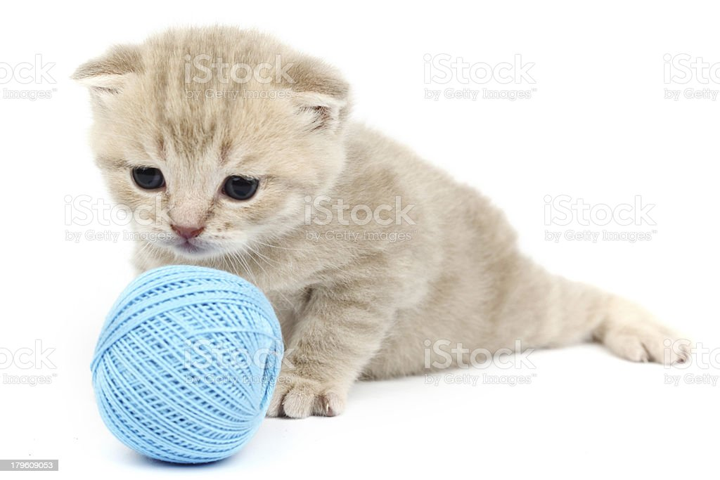 cat and blue wool ball royalty-free stock photo