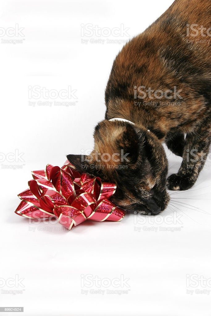 Cat and Bow stock photo