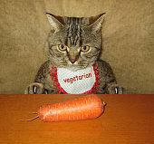 Cat and carrot