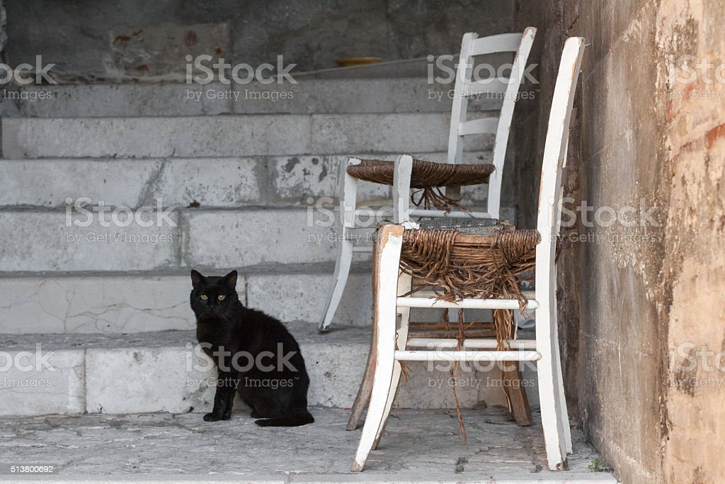 Cat and chair stock photo
