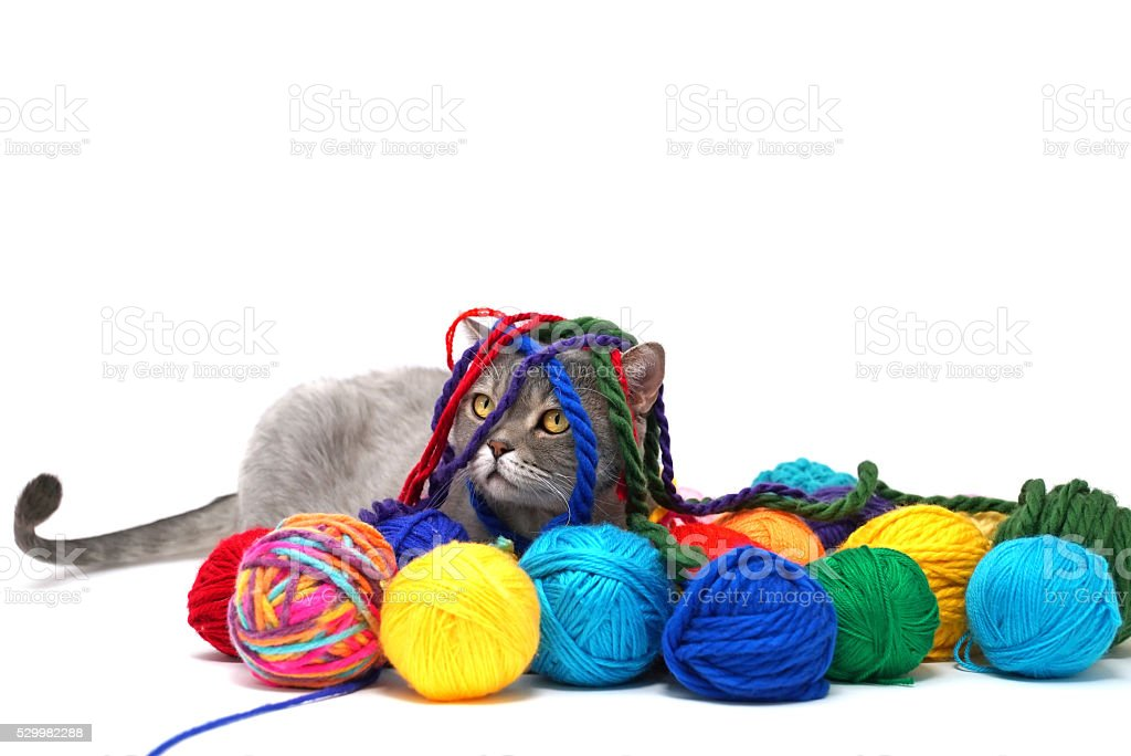 cat and colored wool skein stock photo